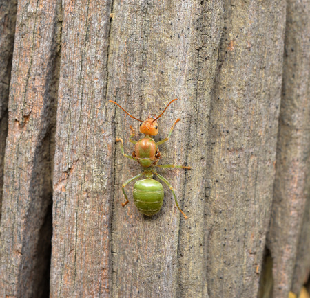 tightness: Ant to climb a tree, background