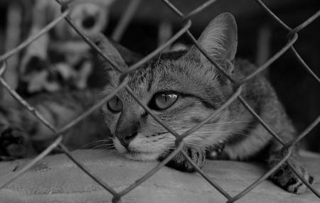 Sad cat in a cage Standard-Bild