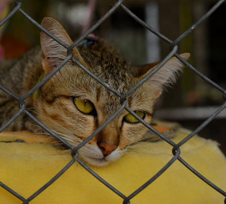 unwanted: Sad cat in a cage Stock Photo