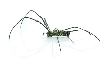 fine legs: spider