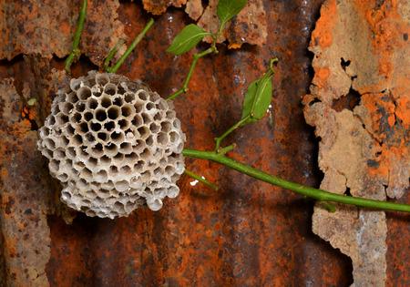 wasp: colmena de avispas