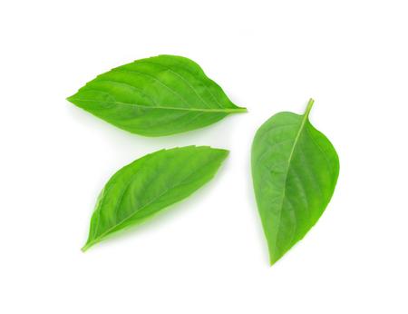 favoring: Sweet Basil isolated on white background. Stock Photo