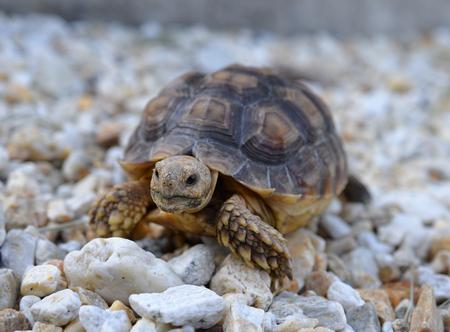 schildkröte: Schildkr?te