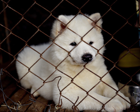unloved: Dog in cage