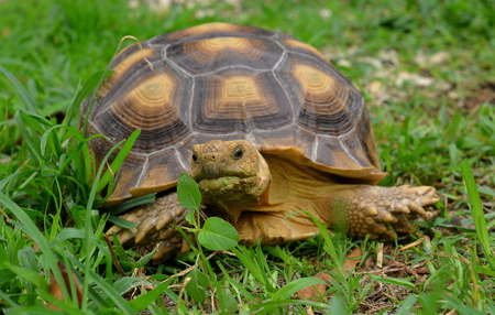 omnivore: turtle
