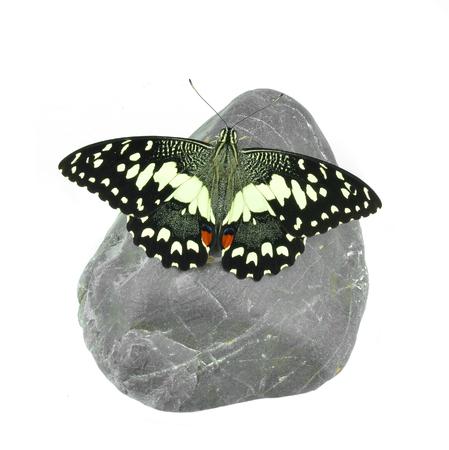 hairy legs: Butterfly