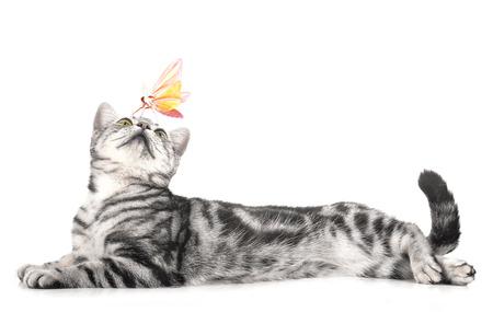 Katze und Schmetterling auf weißem Hintergrund.