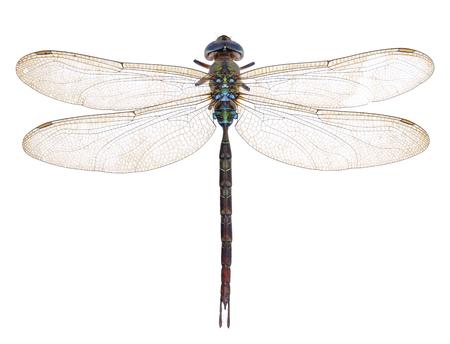Libelle isoliert auf weißem hintergrund Standard-Bild - 79747424