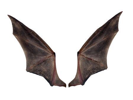 bat wings isolated on white. Reklamní fotografie