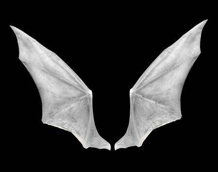 ailes de chauve-souris isolées sur blanc.