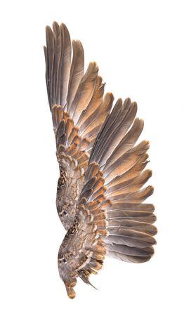 Wing bird isolated on white background Reklamní fotografie