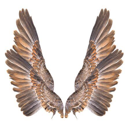 Oiseau aile isolé sur fond blanc