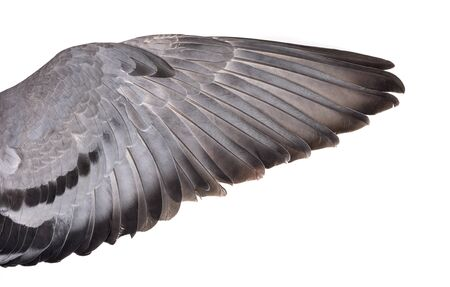 Wing isolated on white background Reklamní fotografie