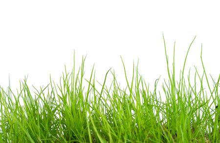 Grünes Gras lokalisiert auf weißem Hintergrund