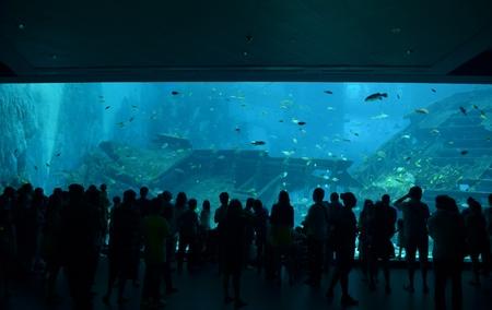 Aquarium viewers in Singapore
