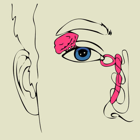 Vector illutration, anatomy of the Lacrimal apparatus Vector