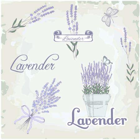 라벤더 허브 꽃, 꽃 빈티지 배경 일러스트