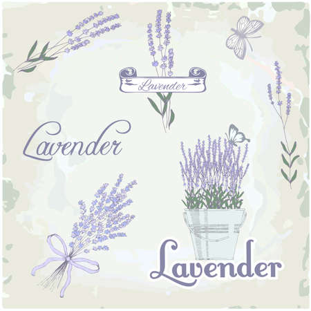 lavender flower:  Lavender herb flower, floral vintage background Illustration