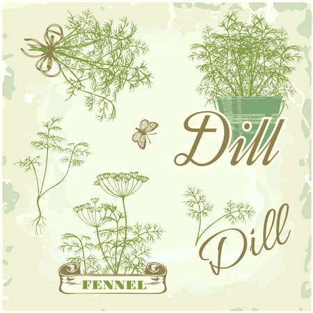 herb garden: fennel, dill, herb, plant, nature, vintage background, packaging calligraphy