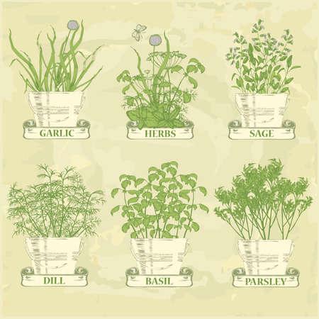 петрушка: травы в горшок, чеснок, петрушка, укроп, шалфей и базилик, травяные фона старинные