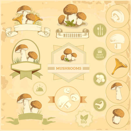 mushrooms, vegetables labels, food product packaging design Vector