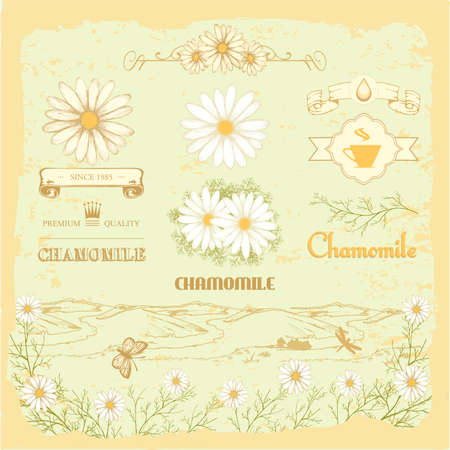 camomile tea: chamomile, camomile,  herb flower, floral vintage background