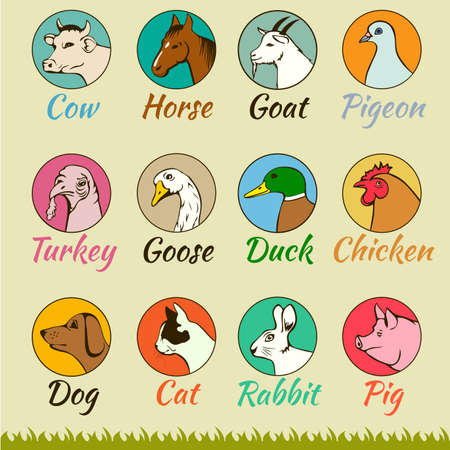 farm animal heads isolated, cat dog horse pig cow goat turkey chicken goose duck pigeon, Vector