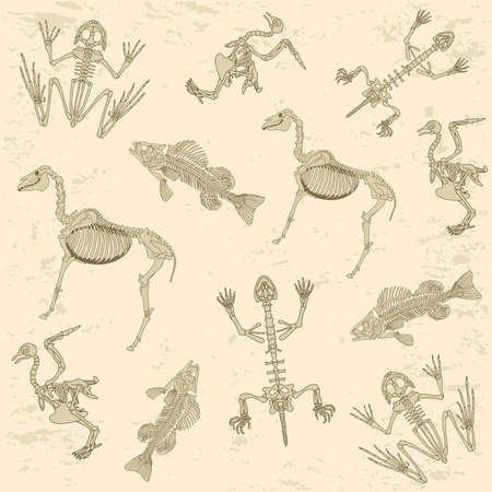 동물 해부학, 말, 비둘기, 개구리와 거북이의 골격, 고고학 생물학 또는 역사 패턴 일러스트