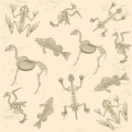 prehistoric: animals anatomy, skeleton of horse, pigeon, frog and turtle, archeology biology or history pattern Illustration