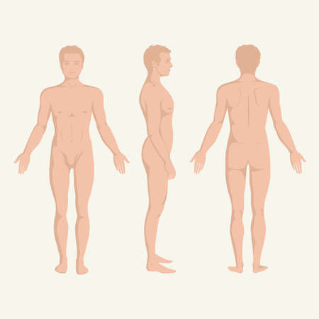 male fashion model: man body anatomy, front, back and side standing human pose  Illustration