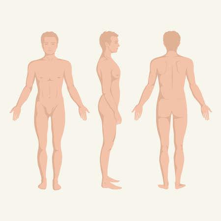 mens lichaam anatomie, voor-, achter-en zijkant staande menselijke vormen