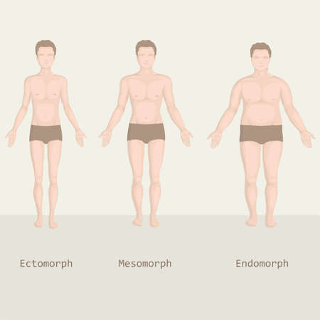 man body types, from fat to fitness, before and after  Vector
