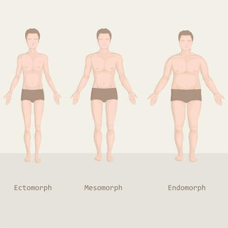 tipos: tipos de cuerpo, el hombre de la grasa a la aptitud, antes y después Vectores
