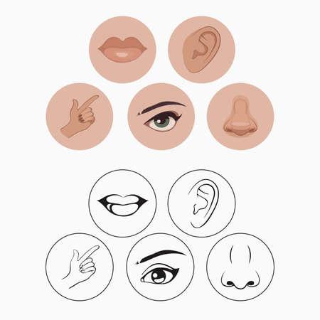 cinq sens, le nez lèvres oeil oreille et la main