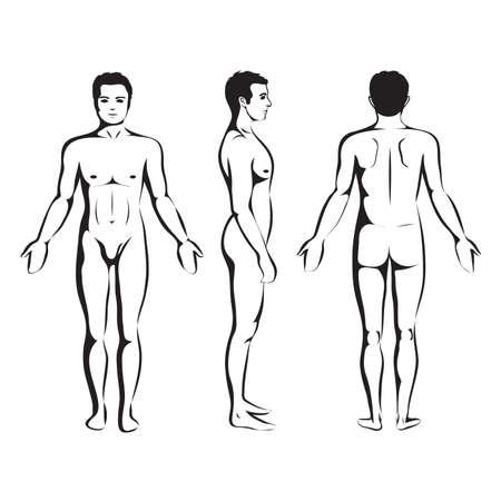 Anatomía del hombre del cuerpo, frontal, posterior y lateral vector humano de pie plantean Ilustración de vector