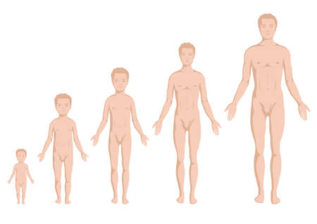 abbildung:  body growing stages, human body anatomy, age stadium