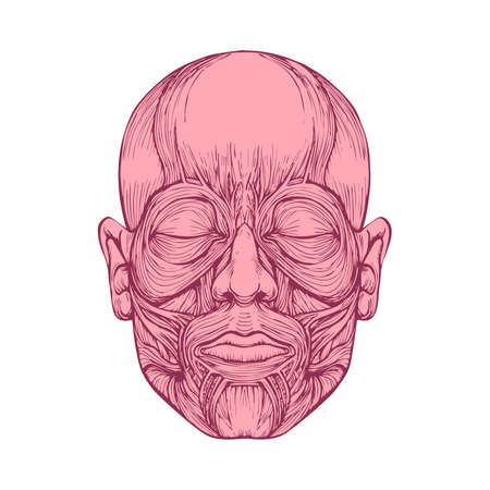 face surgery: muscle of faces, human head anatomy, medical illustration