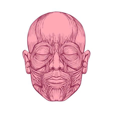 spier van gezichten, menselijk hoofd anatomie, medische illustratie
