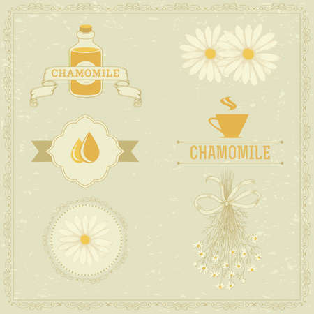camomile tea: chamomile, camomile,  herb flower, floral vintage background
