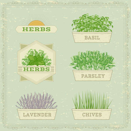 herbs of provence: isolated herbs,lavender, chives, parsley, and basil, herbal vintage background