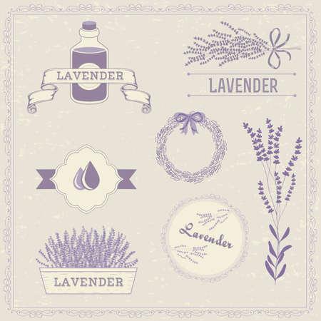 erva: Lavender erva flor, floral fundo do vintage Ilustração