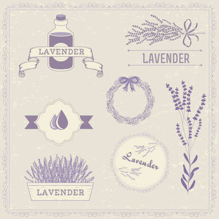 Lavender herb flower, floral vintage background