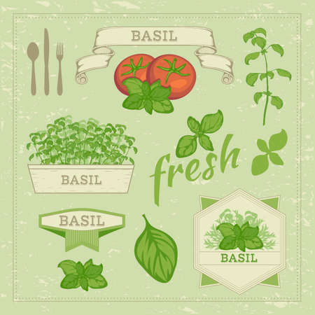 basil leaf: vector isolated herbs illustration, basil leaves and tomato set , food background