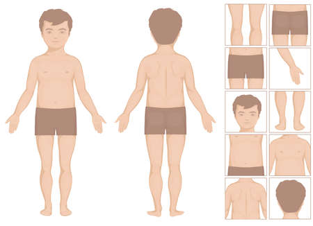human anatomy: human or boy body parts, vector cartoon illustration for kids Illustration