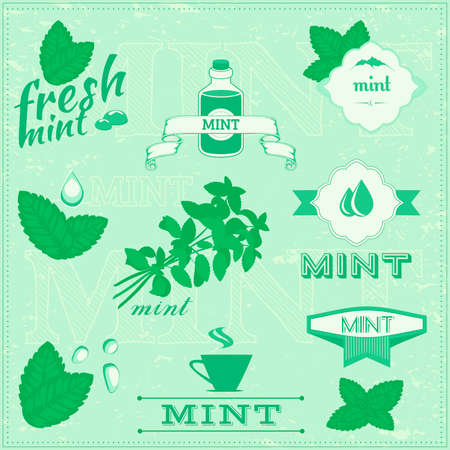 peppermint: isolated herbs, mint vector leaves set illustration, peppermint background