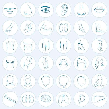 human body parts Illustration