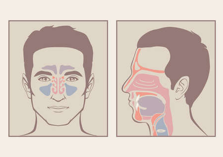 nose, throat anatomy, human mouth, respiratory system Vector
