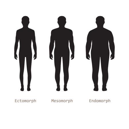 desnudo: cuerpo tipos masculinos, la silueta del hombre figura desnuda, cuerpo humano frente Vectores