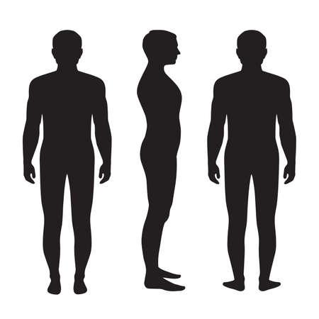 m�nner nackt: K�rper Anatomie, Vektor Menschen Silhouette, vorn R�ckseite