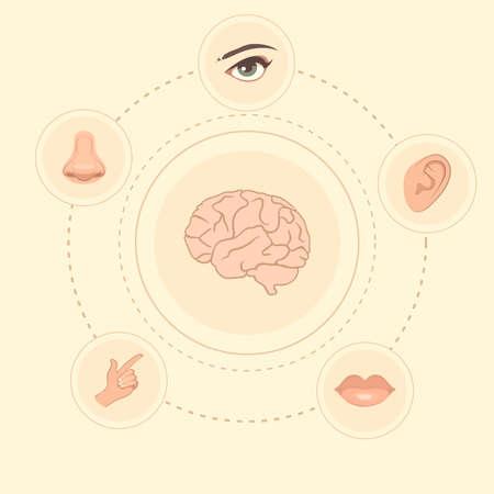 5 つの感覚アイコン、人間の鼻、耳、目および口の図をベクトルします。